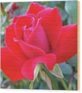 Perfect Form - Knock Out Rose Wood Print