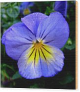 Perfect Pansy Wood Print