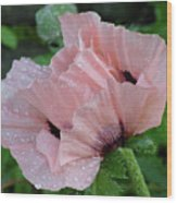 Perfect Peach Poppy Wood Print