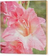 Perfect Pink Canna Lily Wood Print