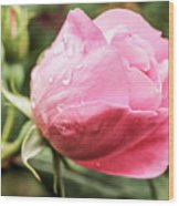 Perfect Pink Rose Wood Print