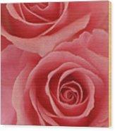 Perfect Pink Roses Wood Print