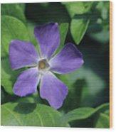 Perfect Purple Periwinkle Wood Print