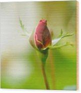 Perfect Red Rose Bud  Wood Print
