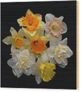 Perfect Ring Of Daffodils Wood Print