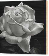 Perfect Rose In Black And White Wood Print