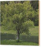 Perfect Tree Swing Wood Print