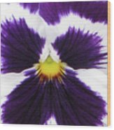 Perfectly Pansy 01 Wood Print