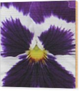 Perfectly Pansy 02 Wood Print