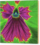 Perfectly Pansy 04 - Photopower Wood Print
