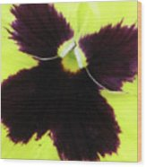 Perfectly Pansy 05 Wood Print