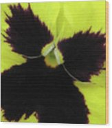 Perfectly Pansy 06 Wood Print