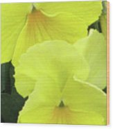 Perfectly Pansy 09 Wood Print