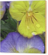 Perfectly Pansy 11 Wood Print