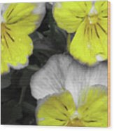 Perfectly Pansy 13 - Bw - Yellow Wood Print