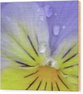 Perfectly Pansy 16 Wood Print