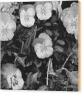 Perfectly Pansy 18 - Bw - Water Paper Wood Print