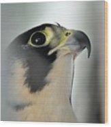 Perigrene Falcon Wood Print