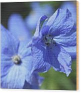 Periwinkle Flower Wood Print