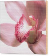 Perky Orchid Wood Print