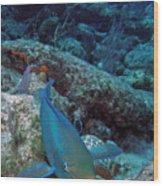 Perky Parrotfish Wood Print