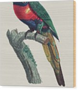 Perruche A Tete Bleue, Male / Rainbow Lorikeet, Male - Restored 19th Cent. Illustration By Barraband Wood Print