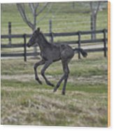 Perry's Colt Running Wood Print
