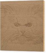Persian Cat 4 Wood Print