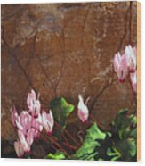 Persian Cyclamen Wood Print