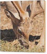 Persian Fallow Deer Wood Print