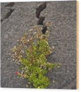 Persistent Flora Wood Print