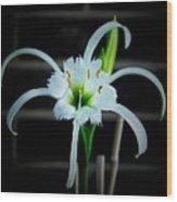 Peruvian Daffodil - 8x10 Wood Print