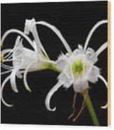 Peruvian Daffodils Wood Print