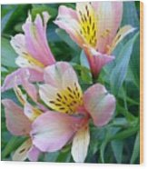 Peruvian Lily Of The Incas Wood Print