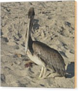 Peruvian Pelican Standing On A Sandy Beach Wood Print