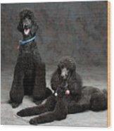 Pet Partners #346 Wood Print