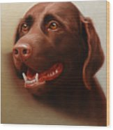 Pet Portrait of a Chocolate Labrador Wood Print