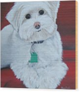 Pet Portrait Painting Commission Maltese Dog  Wood Print