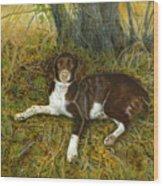 Pet Portrait - Springer Spaniel, Milly Wood Print