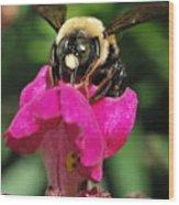 Petal Bumble Beeauty Wood Print