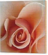 Petal Of Rose Wood Print