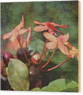 Petals And Berries 8618 Idp_2 Wood Print