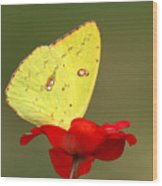 Petals And Wings Wood Print