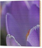 Petals Of Crocus Wood Print