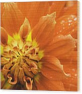 Petals Of Fire Wood Print