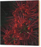 Petals Of Fireworks Wood Print