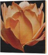 Petals Of Orange Sorbet Wood Print