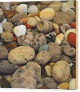 Petoskey Stones With Shells Ll Wood Print
