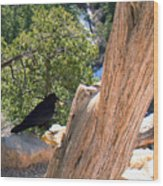 Petrified Raven At Grand Canyon Wood Print