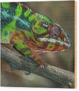 Ambilobe Panther Chameleon Wood Print